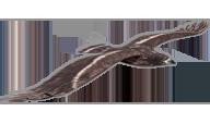 Eagle [PLANEPRINT]